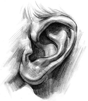 86 best Character Anatomy   Ears images on Pinterest