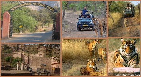Ranthambore Tiger Safari: One of The Best Places For