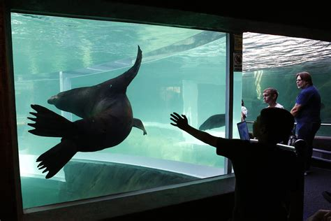 Columbus Zoo officially opens Adventure Cove, underwater
